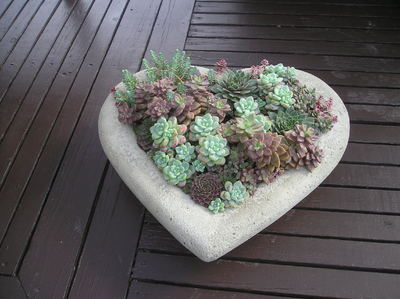 Sat Jun 12 Succulent Heart 3pm